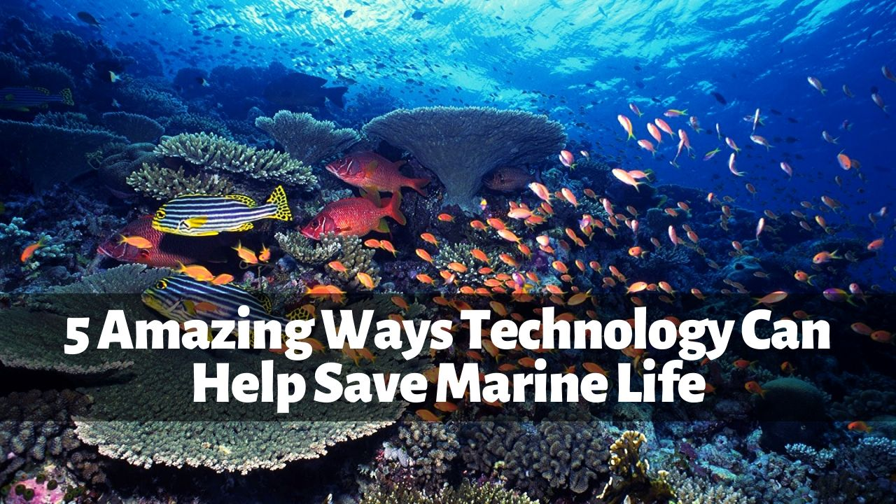 5 Amazing Ways Technology Can Help Save Marine Life