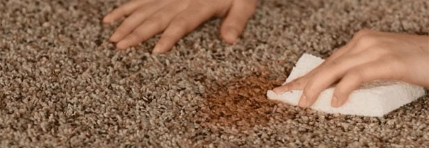 Best Ways for Stain Removal from Carpets 1